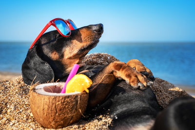 Top 5 Dog Must-Haves for Summer