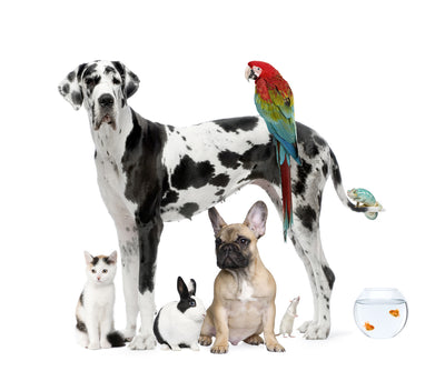 Which Unconventional Pet is Right For You?