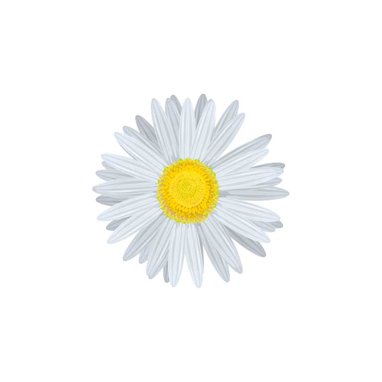 White Daisy Flower Graphic Decal - Ragged Apparel Screen Printing and Signs - www.nmshirts.com