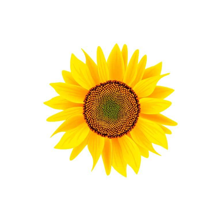 Yellow Sunflower Graphic Decal - Ragged Apparel Screen Printing and Signs - www.nmshirts.com