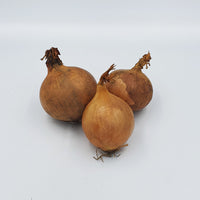 Onion (Yellow) 大葱 (250g±/pkt)