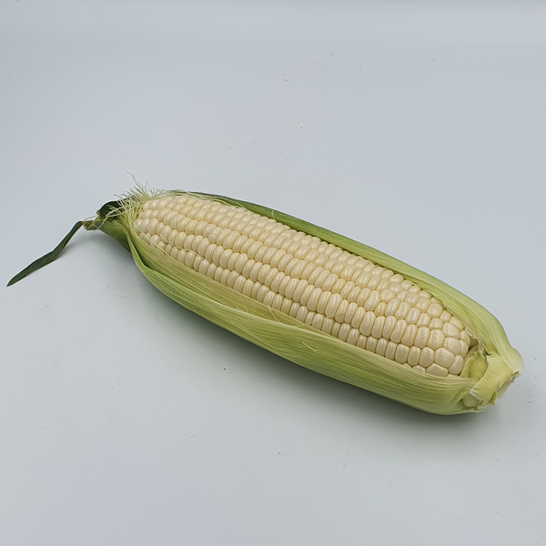 Sweet Corn Cameron White 金马伦白玉米 (by Piece)