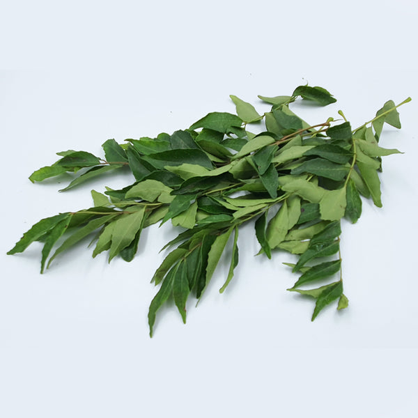 Curry Leaves 咖喱叶 (1bdl/pkt)