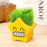 Cute Mini Cartoon Planters - Indoor Therapy