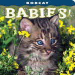 Bobcat Babies!: photography by Lisa Husar: 9781560371335: Books