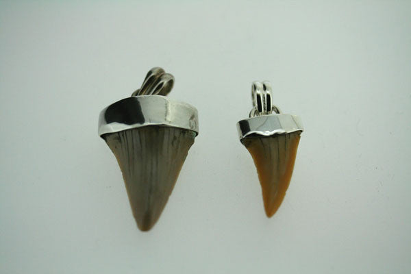 fossilised shark tooth pendant - small on 60cm link chain