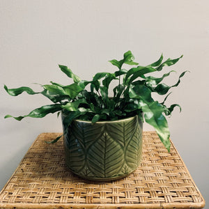 "Cylindrical cover pot (7""x5.5"") leaf design"