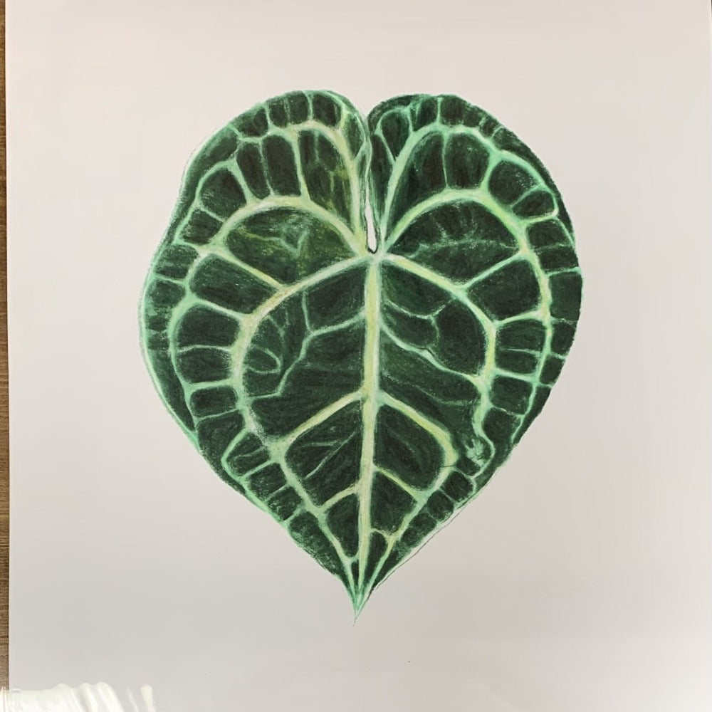 "Coloured Pencil Print (Anthurium Clarinervium) 12""x18"""