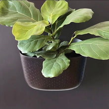 Load image into Gallery viewer, WallyGro Eco Planter (multiple colours available)