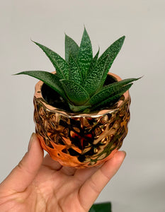 "Pineapple Cover Pot (3""x2.5"") AVAILABLE IN FOUR COLOURS"