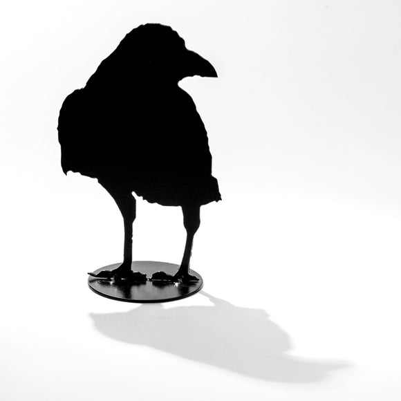 Raven Small Silent One - Being Squawked At (c) - Black Steel