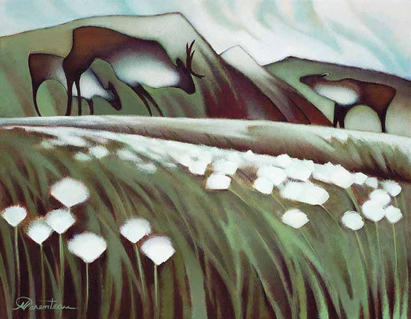 Arctic Cotton Grass - Giclee Canvas