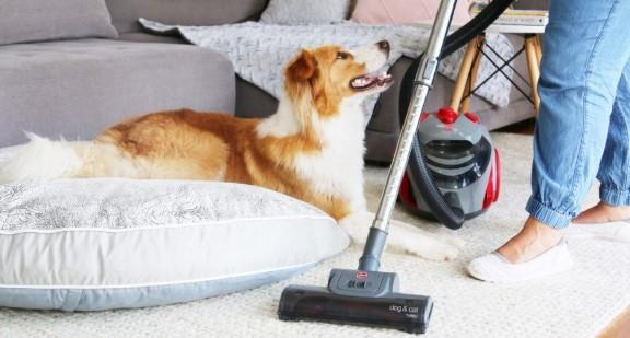 SmarchPawz Tip #2 - Housekeeping & Cleaning