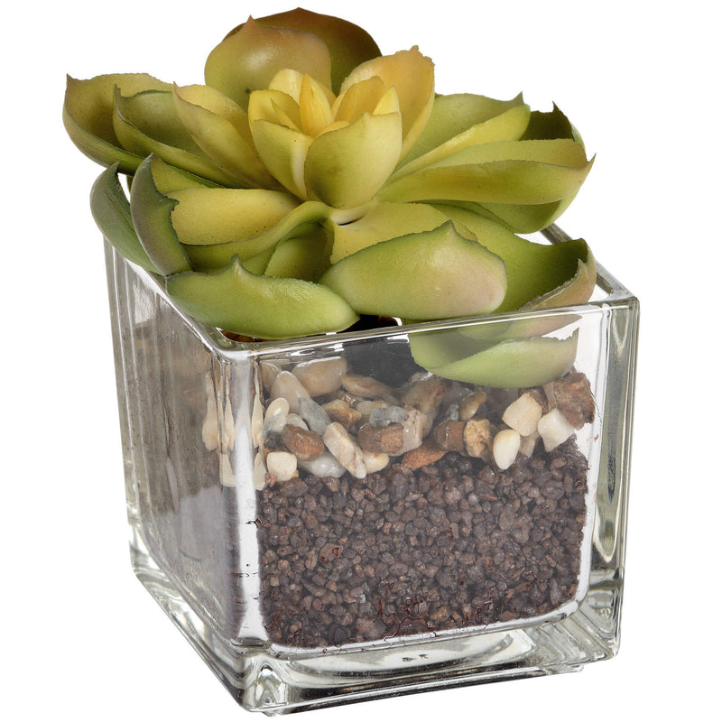 Lotus Lithos Glass Potted Faux In Glass