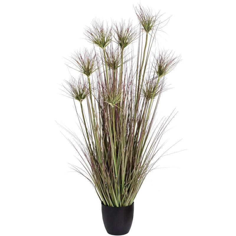 Medium Potted Water Bamboo Grass 48cm
