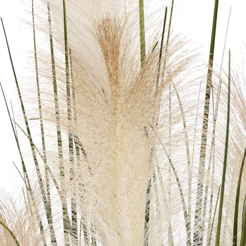 Potted Pampas Grass Bush with White Fronds