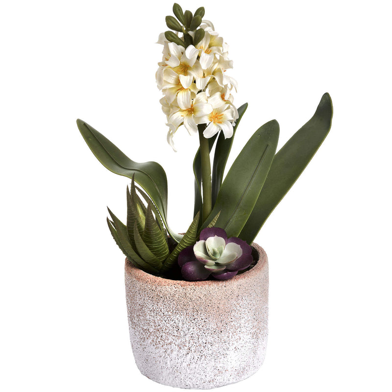 White Potted Hyacinth in a Stoneware Pot