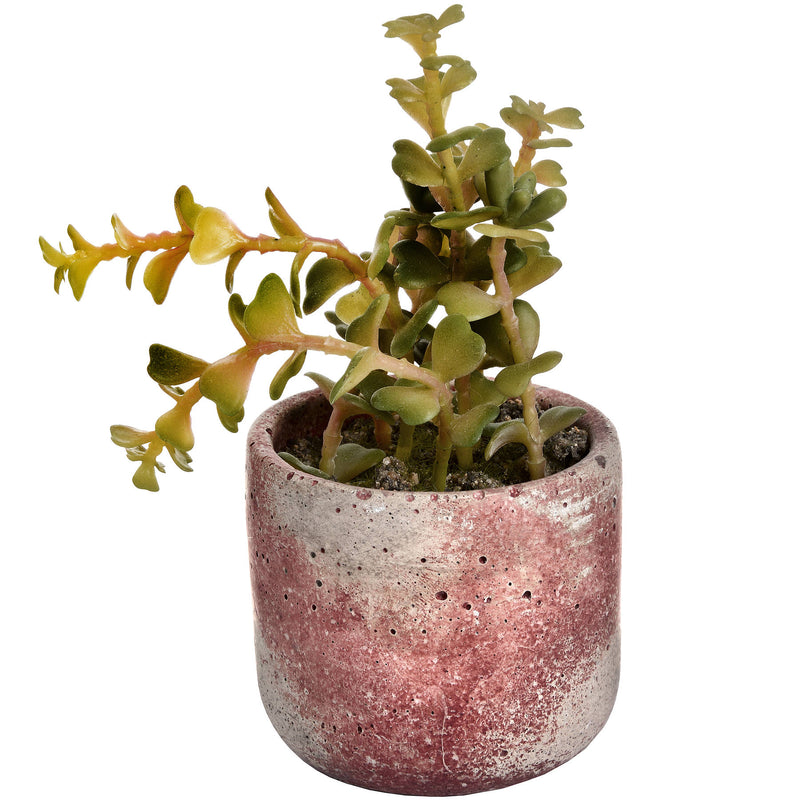 Miniature Terracotta Potted Succulent Plant