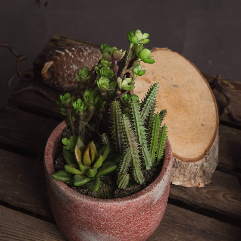 Terracotta Potted Cacti