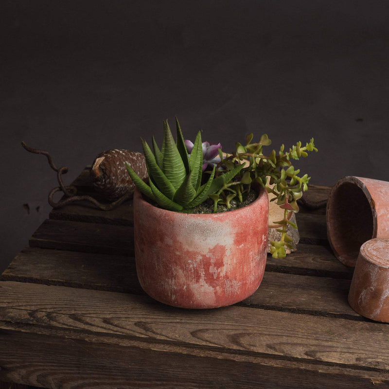 Terracotta Potted Succulent Plant
