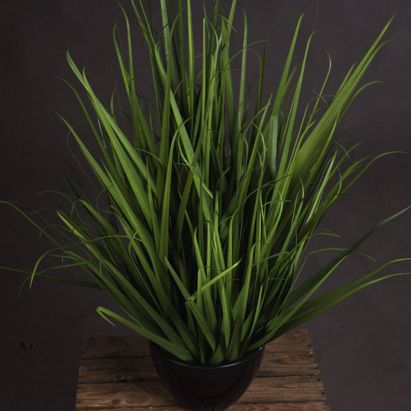 Vibrant Green Large Field Grass Pot