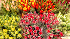 Flower Stand Tulips