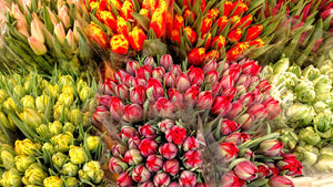 Tulips in the market, Riga, Latvia
