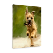 "Load image into Gallery viewer, ""Cairn Terrier Puppy Galloping"" Canvas Gallery Wrap"