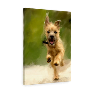"""Cairn Terrier Puppy Galloping"" Canvas Gallery Wrap"