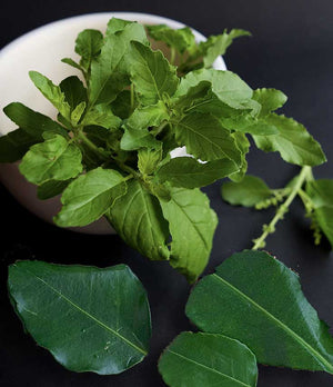 Kaffir Lime Leaves and Holy Basil Leaves