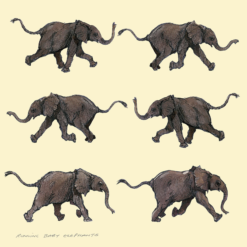 A001 Running Baby Elephants