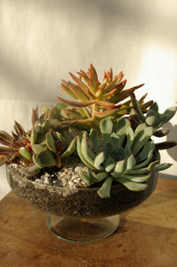 Composition de Succulentes