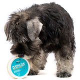 Playful Pup Skin, Nose, and Paw Balm with Sun Protection (50g) - Hownd