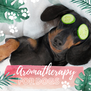 Aromatherapy for Dogs Make & Take Workshop