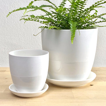 Latitude Pot + Saucer (White)