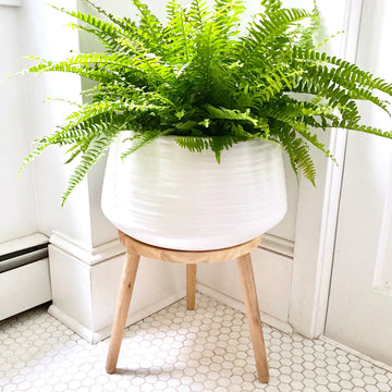 Everett Plant Stand