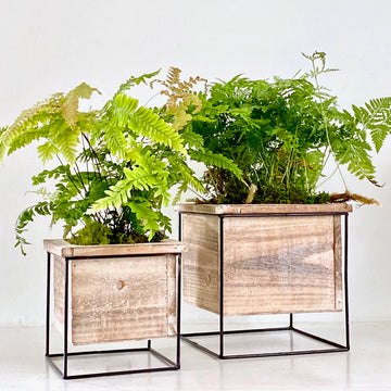 Iron + Wood Fern Garden