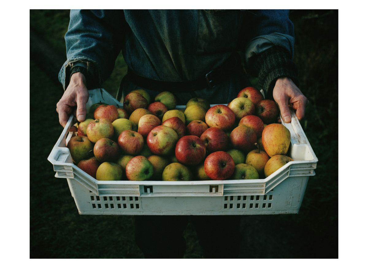 Laurence Ellis's donation for Photographs for the Trussell Trust