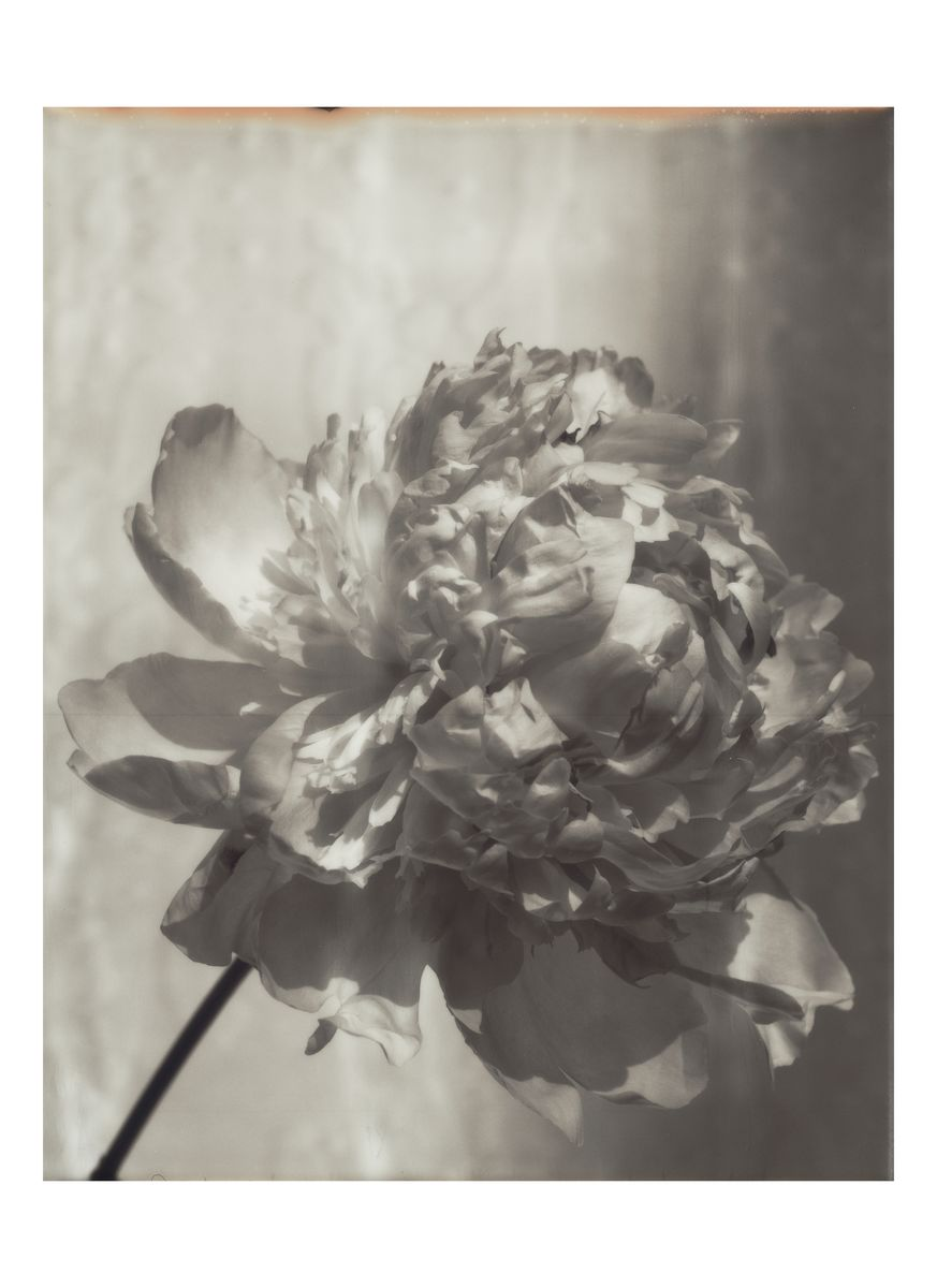 Richard Bush's donation for Photographs for the Trussell Trust