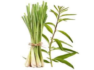 Lemongrass Verbena  Fragrance Oil Phthalate Free - Soap Making Supplies, Essential Oils, Fragrance Oils at Calgary, Alberta Soap and More the Learning Centre Inc in Canada