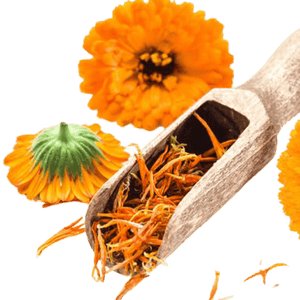 Calendula Petals Pesticide Free - Soap Making Supplies, Essential Oils, Fragrance Oils at Calgary, Alberta Soap and More the Learning Centre Inc in Canada
