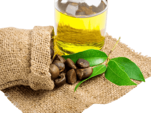 Camellia Seed Oil (Green Tea) - Soap Making Supplies, Essential Oils, Fragrance Oils at Calgary, Alberta Soap and More the Learning Centre Inc in Canada
