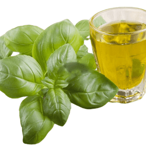 Basil Essential Oil - Soap & More the Learning Centre Inc
