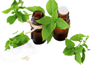 Basil Essential Oil - Soap Making Supplies, Essential Oils, Fragrance Oils at Calgary, Alberta Soap and More the Learning Centre Inc in Canada