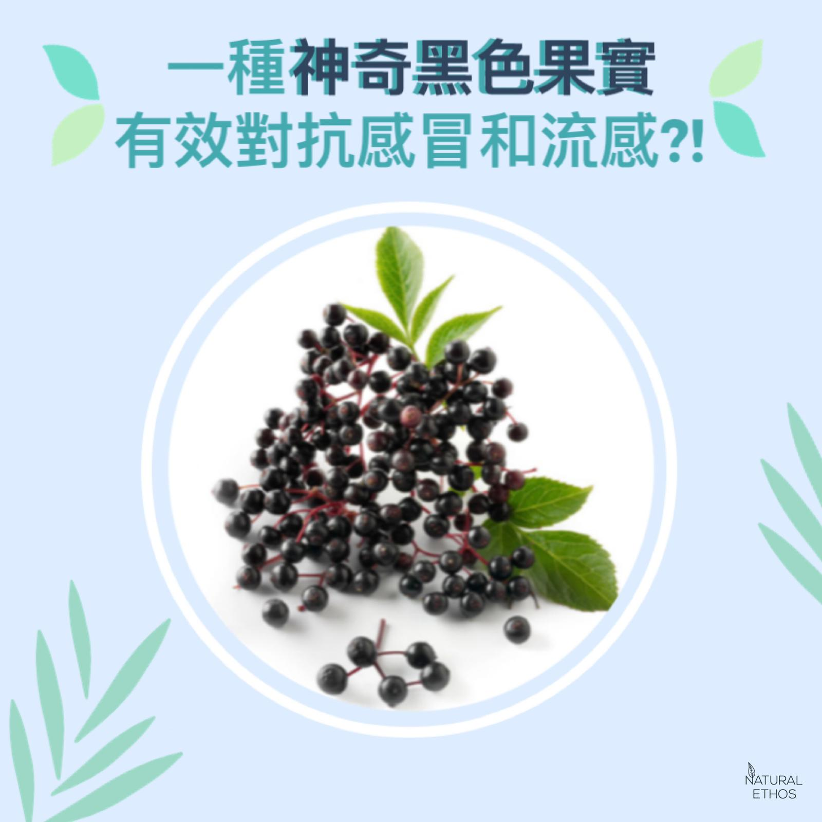 black elderberry sambucol health benefit hk
