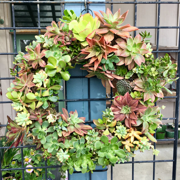 Succulent Wreath - Circle - large (15