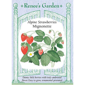 Strawberries - Alpine Mignonette