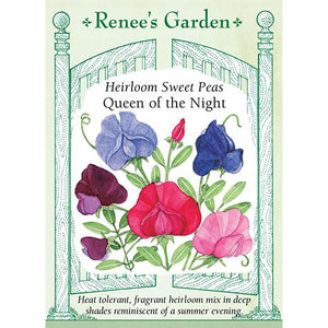Sweet Peas - Heirloom Queen of the Night