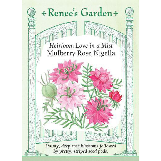 Nigella - Heirloom Love in a Mist Mulberry Rose
