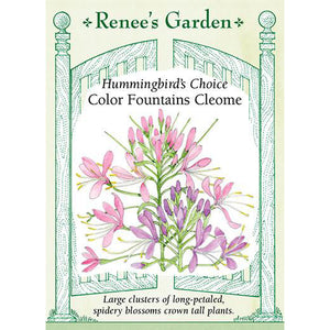 Cleome - Hummingbird's Choice Color Fountains